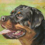 Rottweiler, 30x40, Pastell