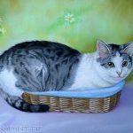 Katze im Korb, 30x40, Pastell
