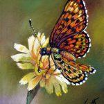 Schmetterling, 20x28, Pastell